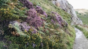 Cliff_Flowers